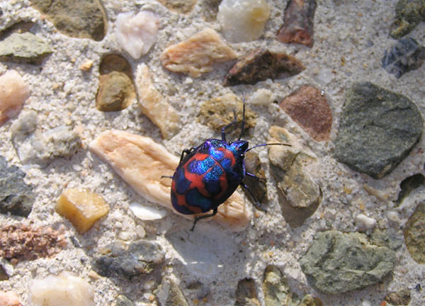 Colourful bug