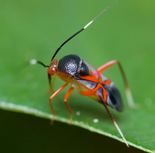 50 Pictures Of Amazingly Colourful Insects