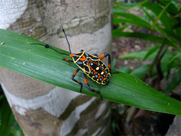 Colorful Mexican Insect